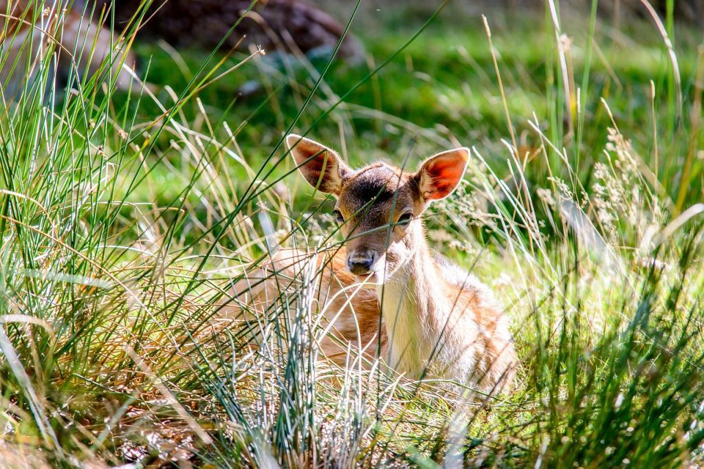 bambi val_di_sole_chalet_alpenrose