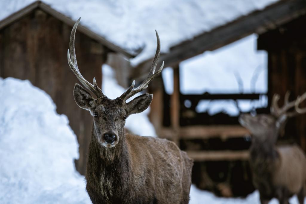 wildlife_watching_chalet_alpenrose_val_di_pejo