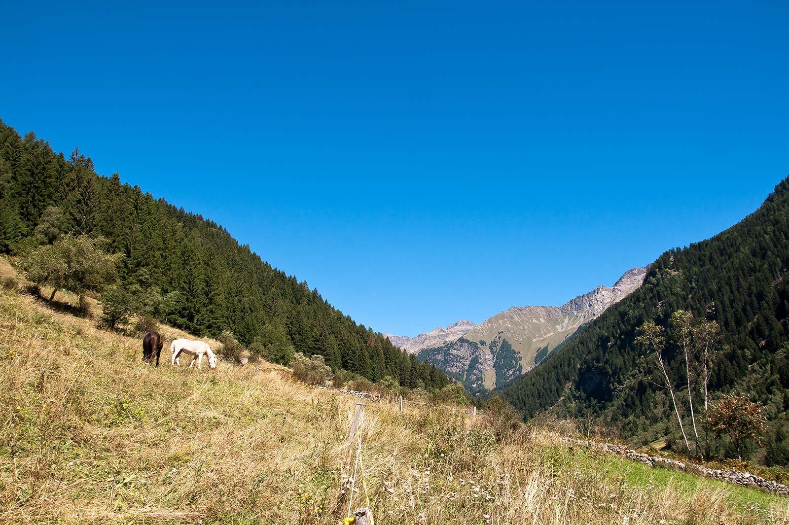 Naturhotel Südtirol